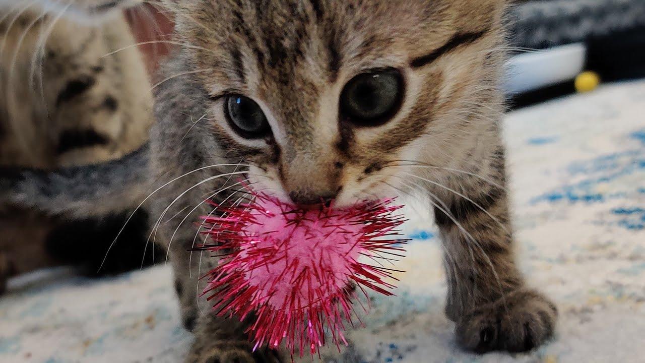 Kittens Vs New Toys, Nonmoms Goodbye 2021-03-05