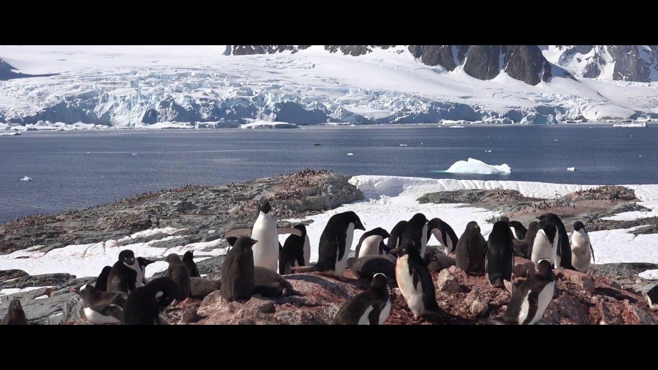 【動画】オーシャンアドベンチャラーで航く南極クルーズ