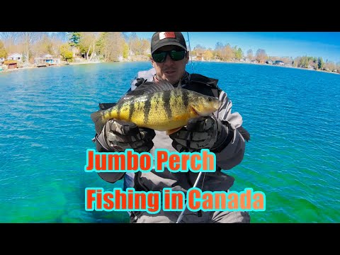 Fishing For Perch In Canada
