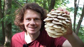 Sommer, Sonne, Seitlinge - Wildkräuter und Pilze Sammeln im Juni 2021