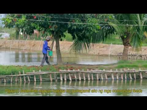 Alimango at Sugpo Palaisdaan