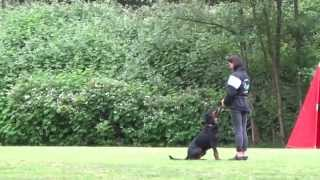 Rottweiler Obedience (regional Championship Of Bc,canada 2015 - Schh 3)