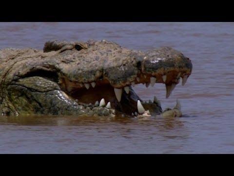 Capturing the Killer Croc