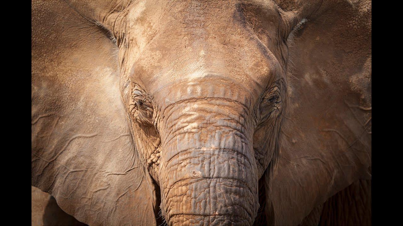 Elephant Protection Initiative (EPI)