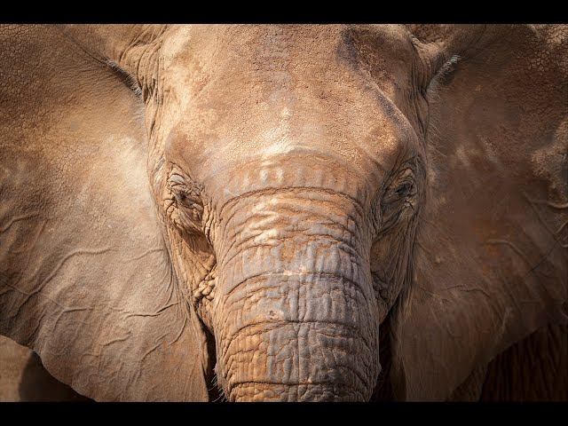 Elephant Protection Initiative (EPI)