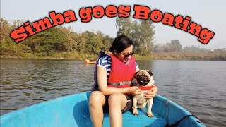 Simba goes boating and swimming | Cutest Pug Video