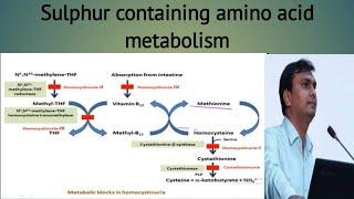 Sulphur containing amino acids (Methionine and cysteine) metabolism - Homocystinuria - Cystinuria