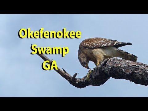 Okefenokee Swamp GA