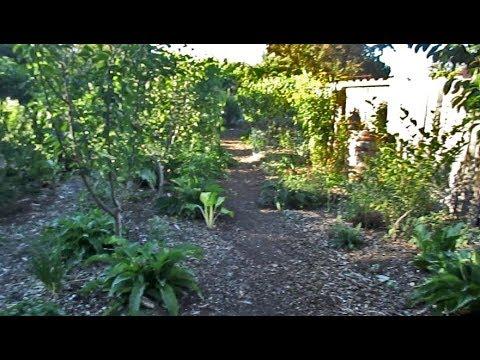 Plant Abundance Complete Garden Walkthrough July 2017
