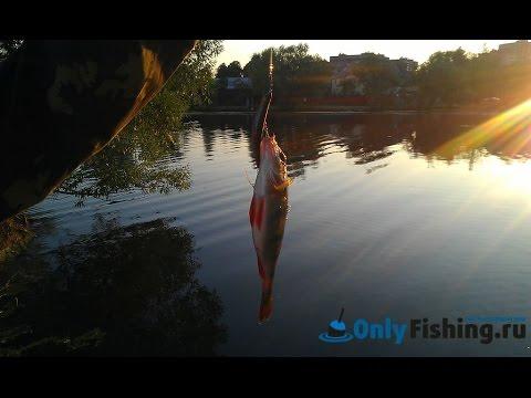 Рыбалка на Говоровском пруду. Ловля окуня. Ловля щуки.