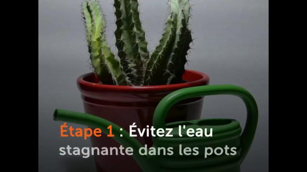 arroser un cactus - ooreka.fr - youtube
