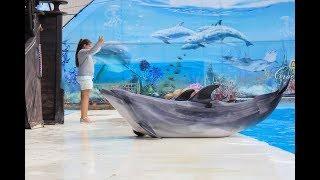 Для ялтинских школьников в театре морских животных провели тематический урок «Твоя будущая профессия