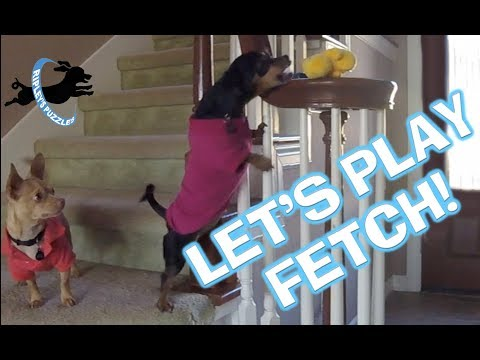 Ripley: Dog Who Fetches Everywhere | We Play Smart Dog Hide-And-Seek Games