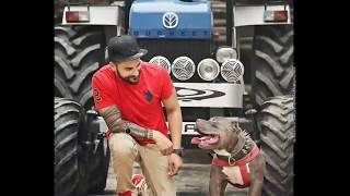 Hot Blood Line Pitbull Dog ! Full Fighter Pitbull In punjab ! Raja Line Pitbull ! Rule By Singha