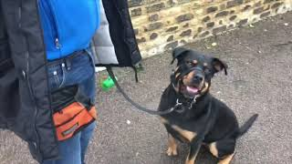 THE REACTIVE NON REACTIVE ROTTWEILER. 'Change the little things and...