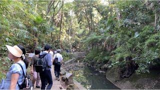 【4K】Tokyo Walk  Todoroki Valley, 2020