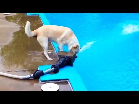 DOG LOGIC 🐶 Funny Dogs Video [Funny Pets]