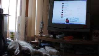 Кошка сидит вконтакте