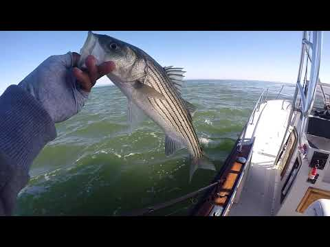 Jetty Fishing For Striped Bass In Reedville, VA | Why BRAID Is Best