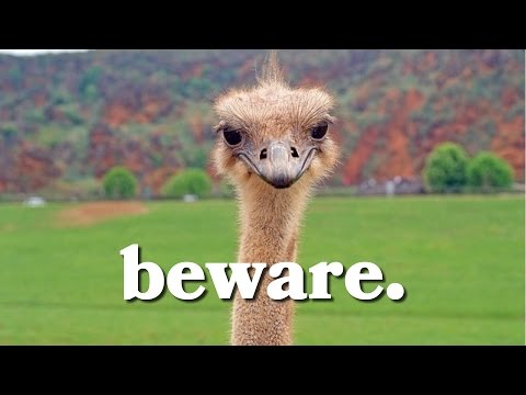 beware-the-ostrich-effect-when-it-comes-to-money