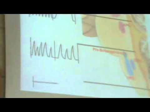 Dr Hany Gamal Chemical Regulation Of Respiration 23-4