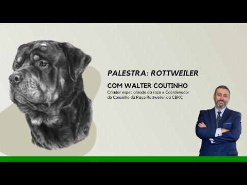 Palestra: Rottweiler