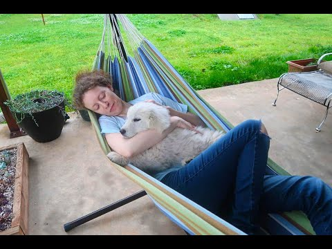 Meet Our Great Pyrenees LGD Puppy | Oklahoma Ranch Life