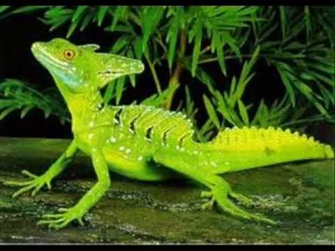 Green Basilisk Lizard Tribute - YouTube