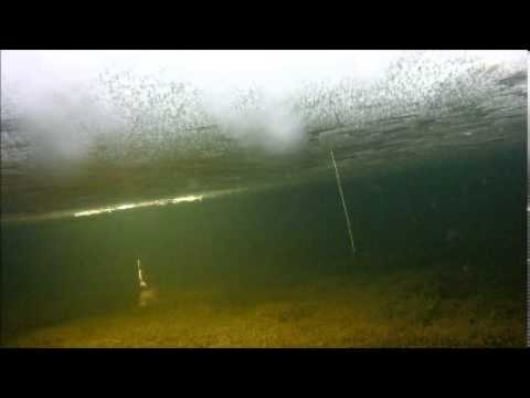 Underwater Video of Ice Fishing for Trout