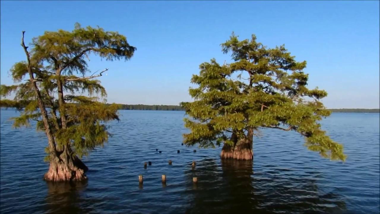 Exploring Reelfoot Lake State Park: Keystone Trail