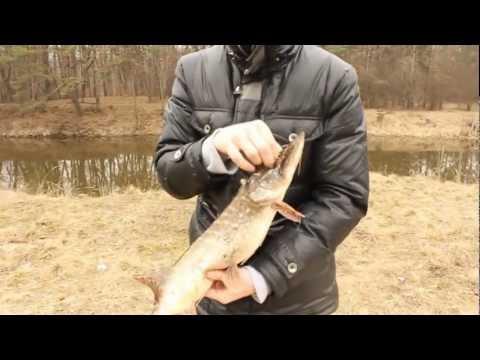 Рыбалка в Черкасской области. Щука в апреле. Дахновка.