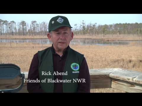 Blackwater National Wildlife Refuge