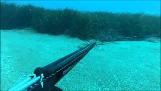 Zıpkınla balık avı BARBUN