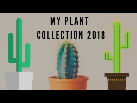 MY PLANT COLLECTION 2018 (CACTI)