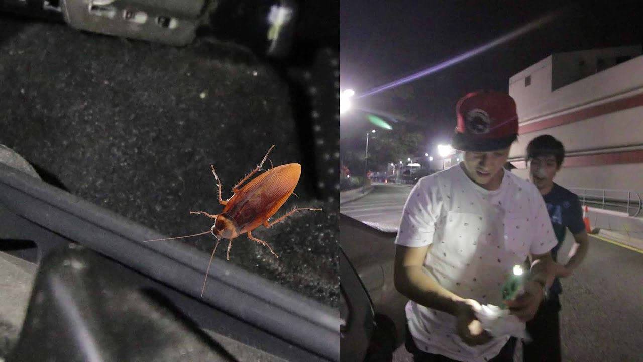 COCKROACH IN OUR CAR! - YouTube