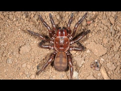 Spider biodiversity in WA and the Pacific - Amber Beavis [HD] Top 5 Under 40, ABC RN