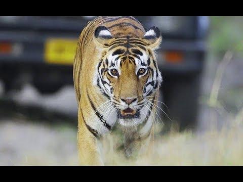 Taj Safaris - Experience the Unparalleled Beauty of the Jungles of India