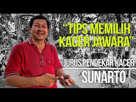 KISAH SUKSES : Sunarto Siapkan Kacer Gacor Buka Ekor Sebelum Lomba
