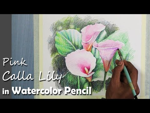 How to Paint Pink Calla Lily in Watercolor Pencil