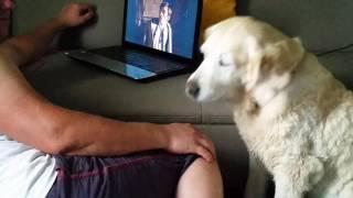 Собака любит хозяина