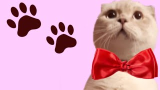 CUTE CATS 🐈🐱/ Wow Cute Pets / милое видео с кошками