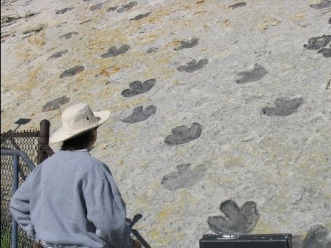 Dinosaur Footprints at Dinosaur Ridge - Morrison, Colorado