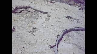 Dinosaur Footprints at Dinosaur Ridge - Morrison, Colorado