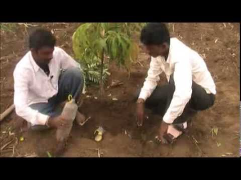 Bottle irrigation method Kannada BAIF Karnataka