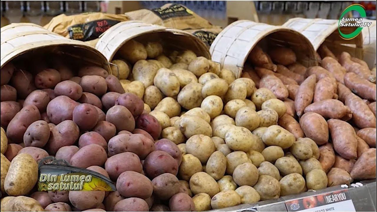 tratamentul cartofului varicos