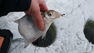 ЛОВЛЯ НА ЧЕРТА Поклёвки на камеру Зимняя рыбалка на чёртика на Можайском водохранилище