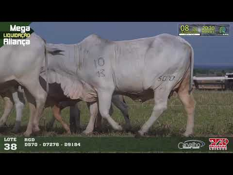 LOTE 038