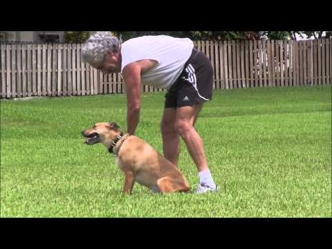 Dog Training - Teaching a Fast and Reliable 'Come' command