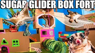WORLDS BIGGEST SUGAR GLIDER BOX FORT ZOO!! Flying Animals & More