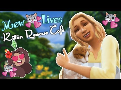 Dreams of Rescue Kittens!! 😻 Mew Lives: Kitten Rescue Café! • #1